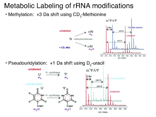 rRNA_metabolic_labeling